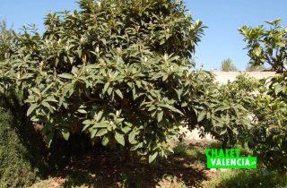 G12582-campo-naranjos-frutales-chalet-lliria-valencia