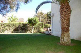 G13890-jardin-semi-privado-palmera-chalet-valencia