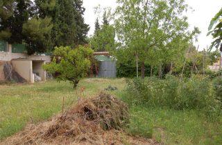 G14127-exterior-campo-cultivo-chalet-valencia