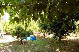 G14537-jardin-chalet-valencia