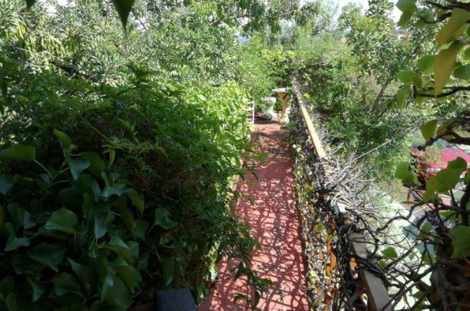 G14754-exterior-jardin-2-chalet-valencia