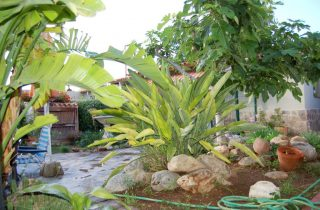 G14856-jardin-chalet-valencia