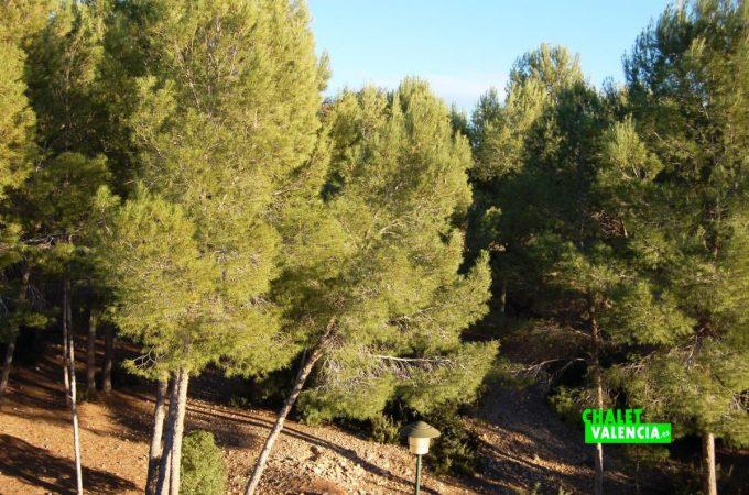 20529-atico-vistas-pinada-2-torre-conill-chalet-valencia