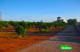 27675-campo-cultivo-casa-chalet-valencia