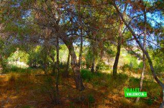 28844-3331-chalet-valencia