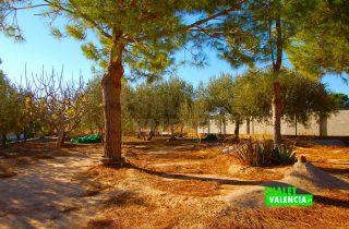 31388-campo-cultivo-chalet-valencia