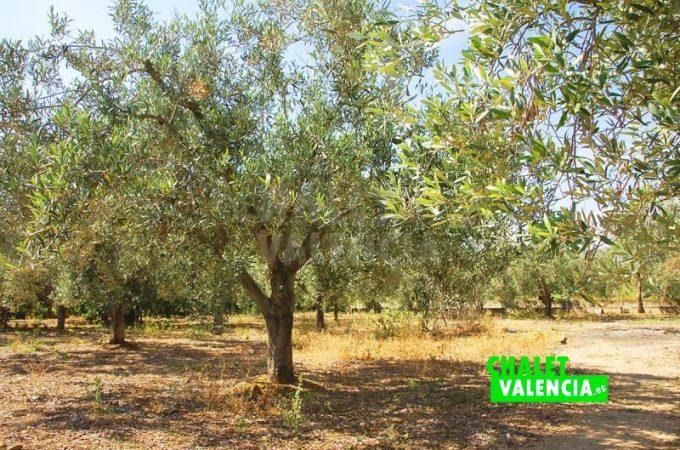 37317-9088-chalet-valencia