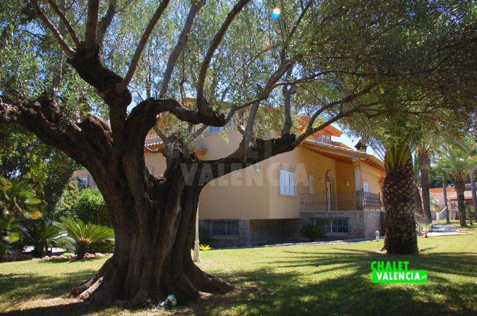 37931-jardin-sombra-arboles-chalet-valencia