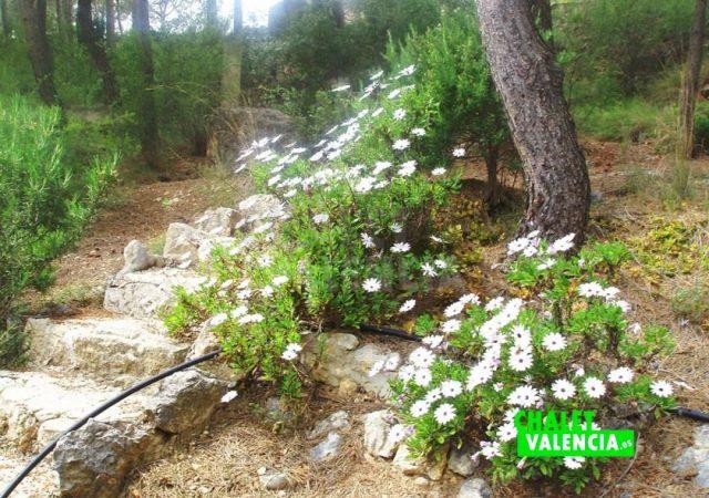 39425-jardin-3-chalet-valencia