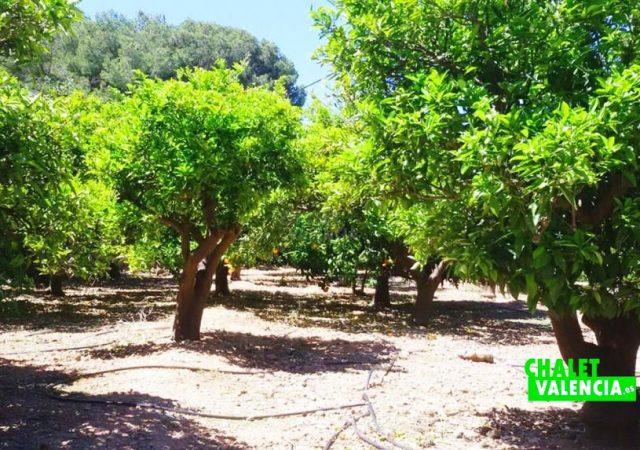45030-campo-cultivo-sagunto-chalet-valencia