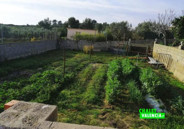 45056-exterior-campo-cultivo-chalet-valencia