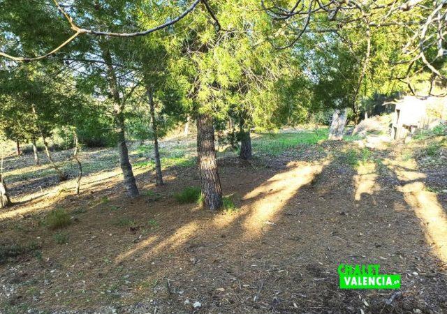 46747-jardin-pinos-chalet-valencia