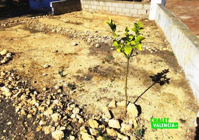 47086-cultivo-2-los-visos-chalet-valencia
